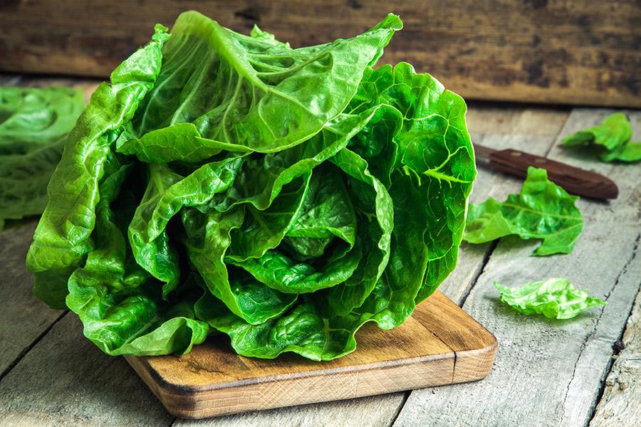 Terranova Seeds - Salad Mix