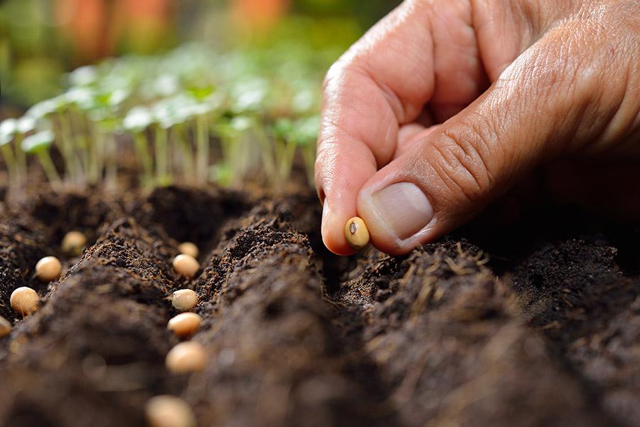 Terranova Seeds - Seed Requirements