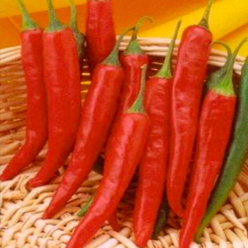 LONG RED CAYENNE - SLIM Image