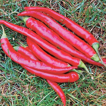 LONG RED CAYENNE - THICK Image